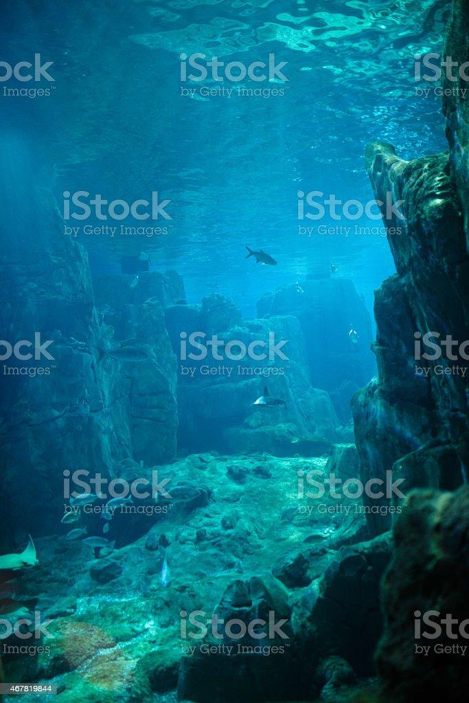 Exotic fishes in an aquarium stock photo