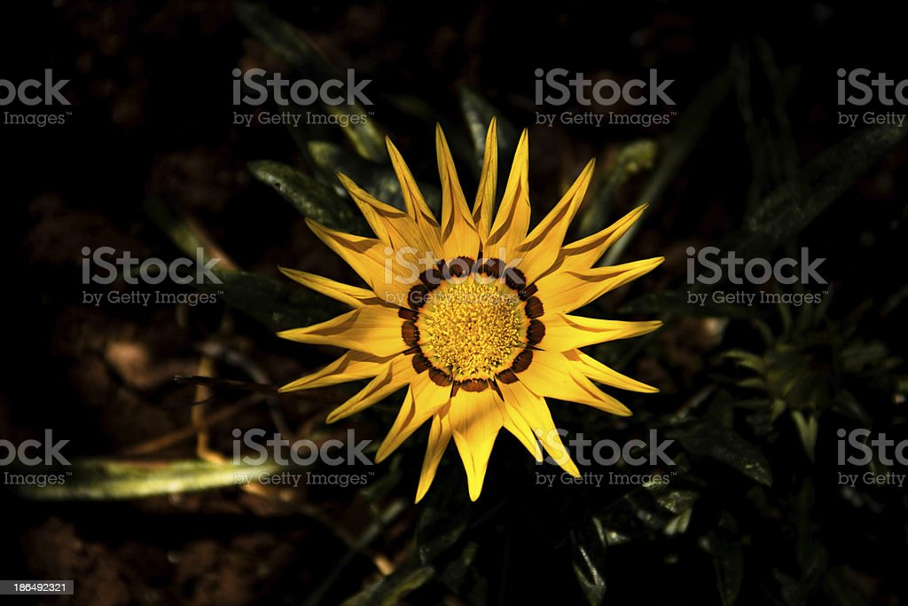Exotic Flower royalty-free stock photo