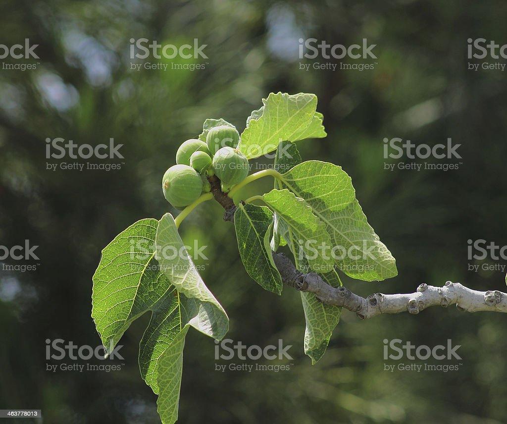 Frutas exóticas foto de stock libre de derechos