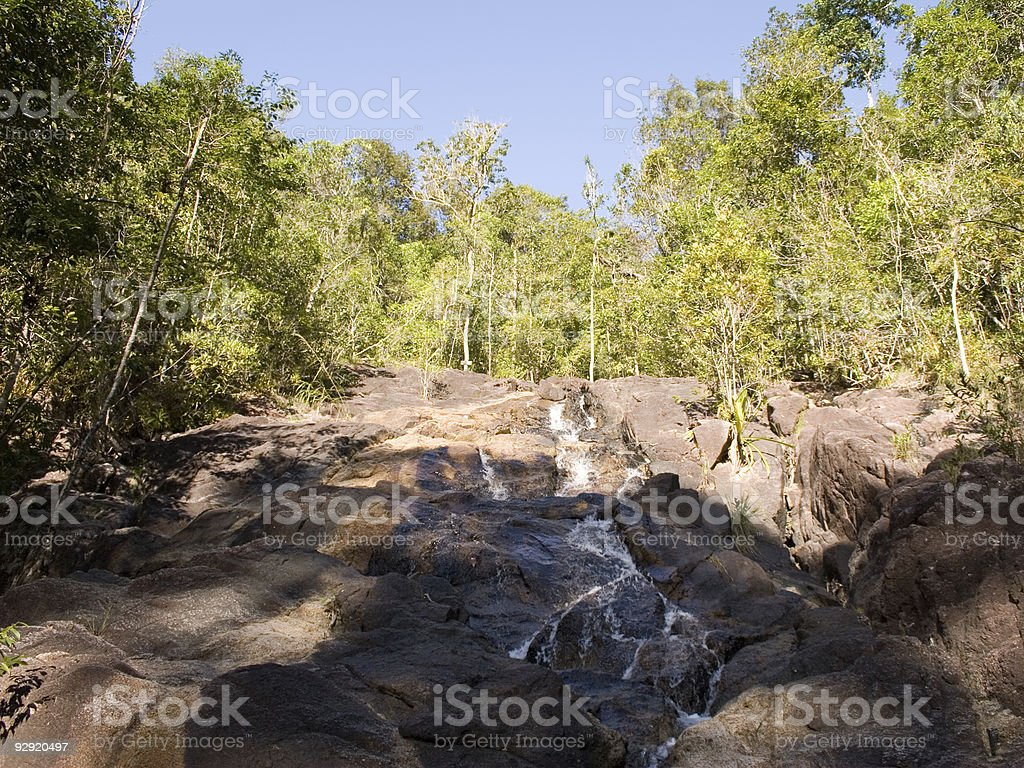 Exotic Jungle - Thailand stock photo
