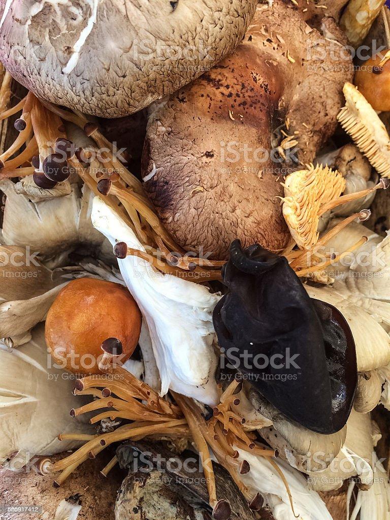Exotic Mushrooms stock photo