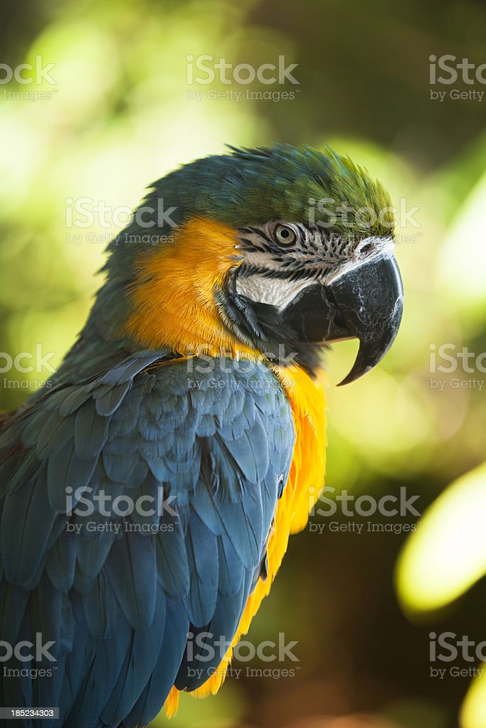 Exotic parrot stands outdoors in a tree royalty-free stock photo