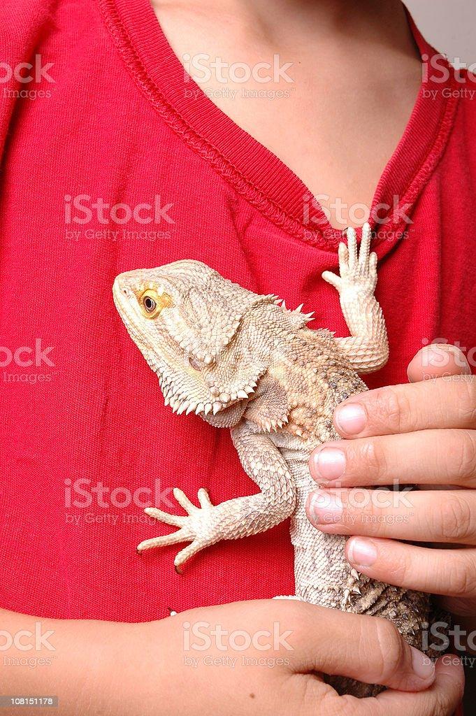 Exotic Pet Lizard Climbing Boy's Shirt royalty-free stock photo