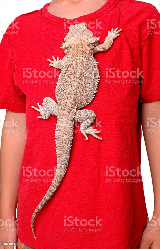 Exotic Pet Lizard Climbing Boy's Shirt stock photo