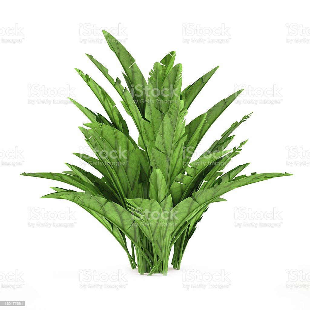 Exotic plant bush royalty-free stock photo
