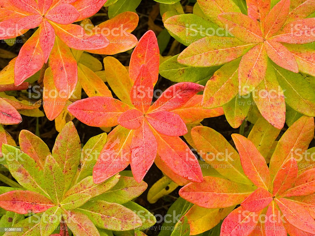 exotic plants floral background stock photo