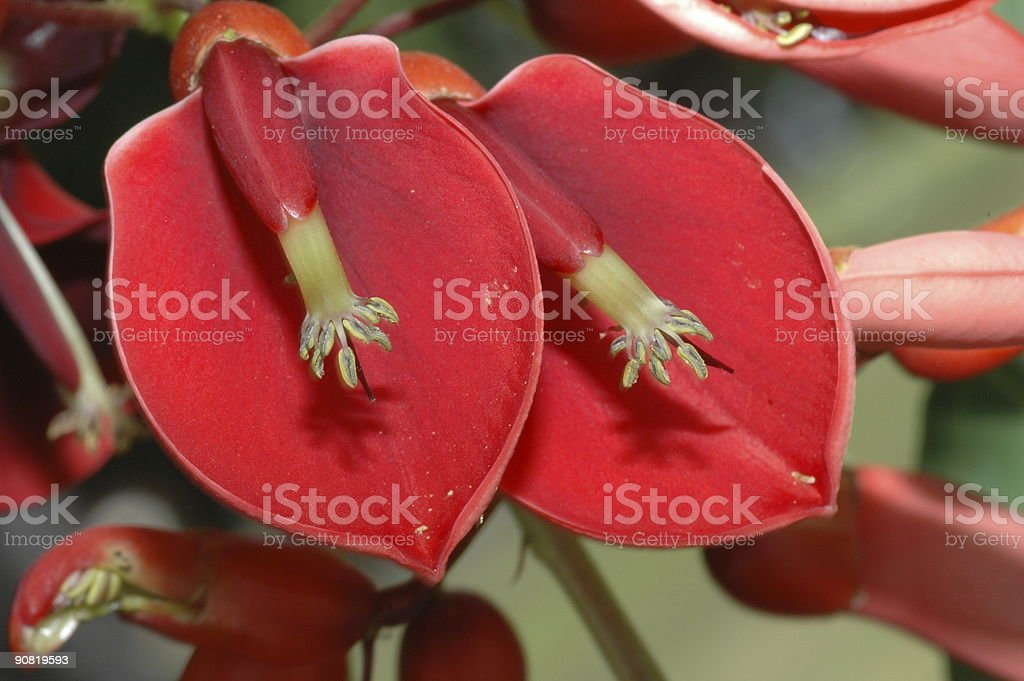 Exotic Plants from Hawaii stock photo