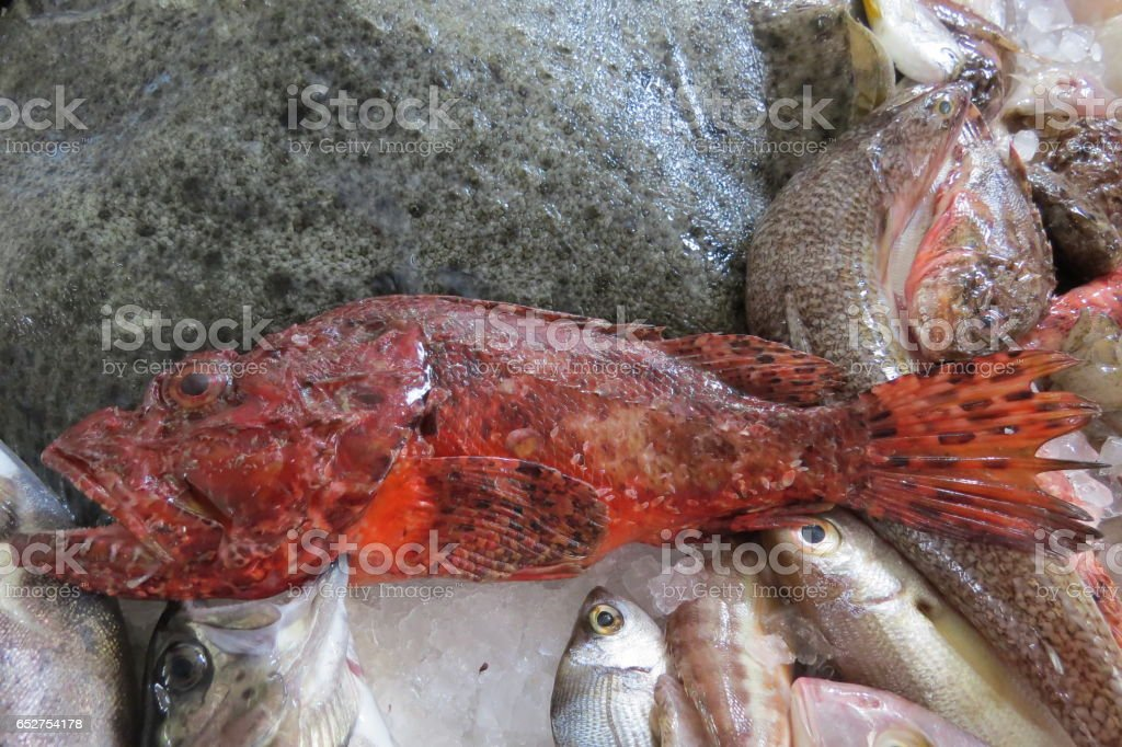 Exotic sea fish stock photo