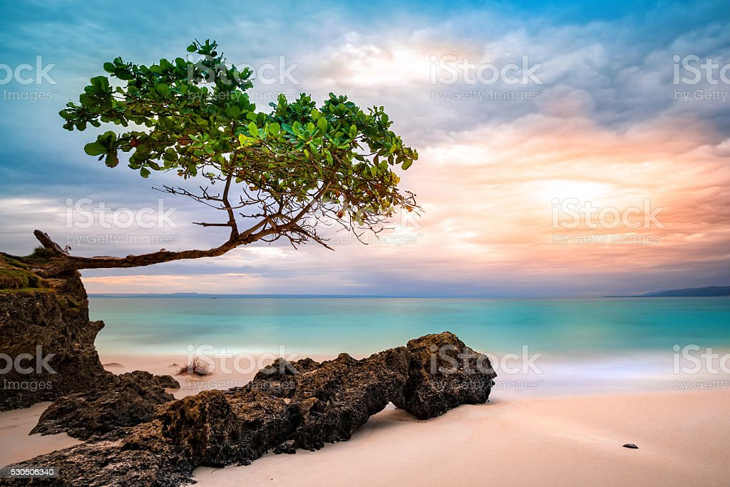 Exotic seascape with sea grape tree stock photo
