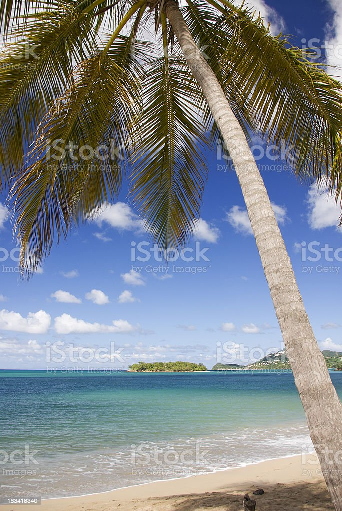 exotic tropical island beach and coconut palm tree royalty-free stock photo