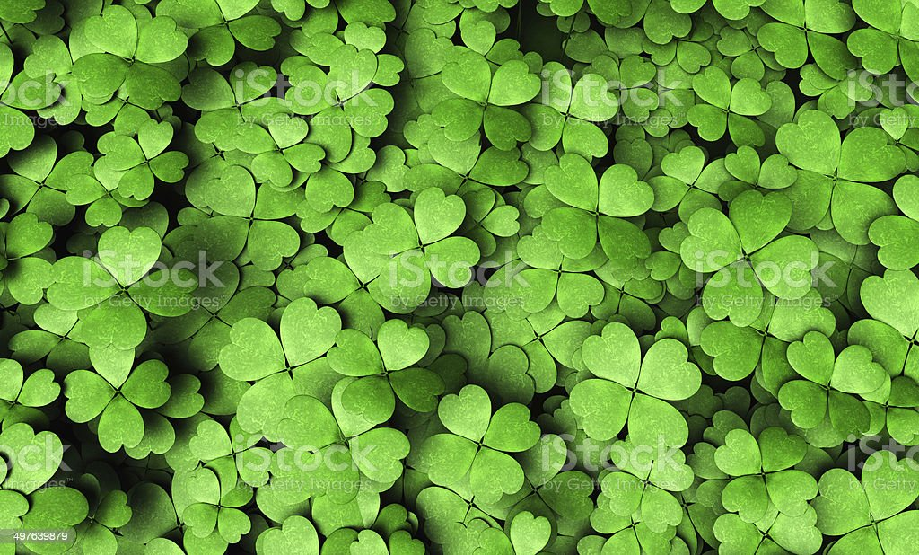Expanse of four-leaf clovers stock photo