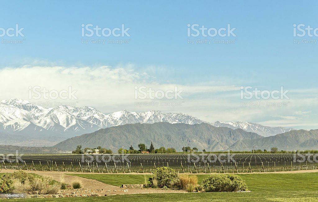 Expanse of vineyards royalty-free stock photo
