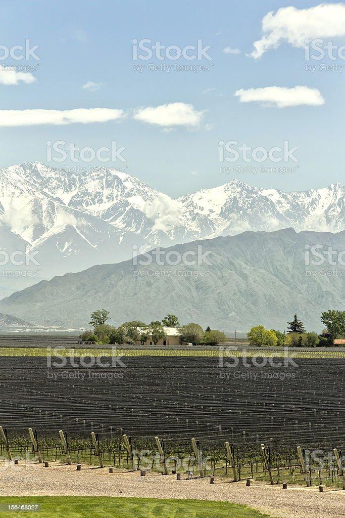 Expanse of vineyards royalty-free stock photo