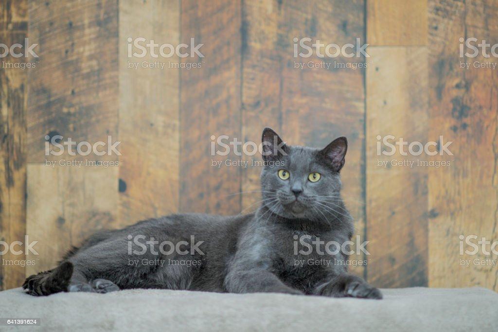 Expectant Cat stock photo