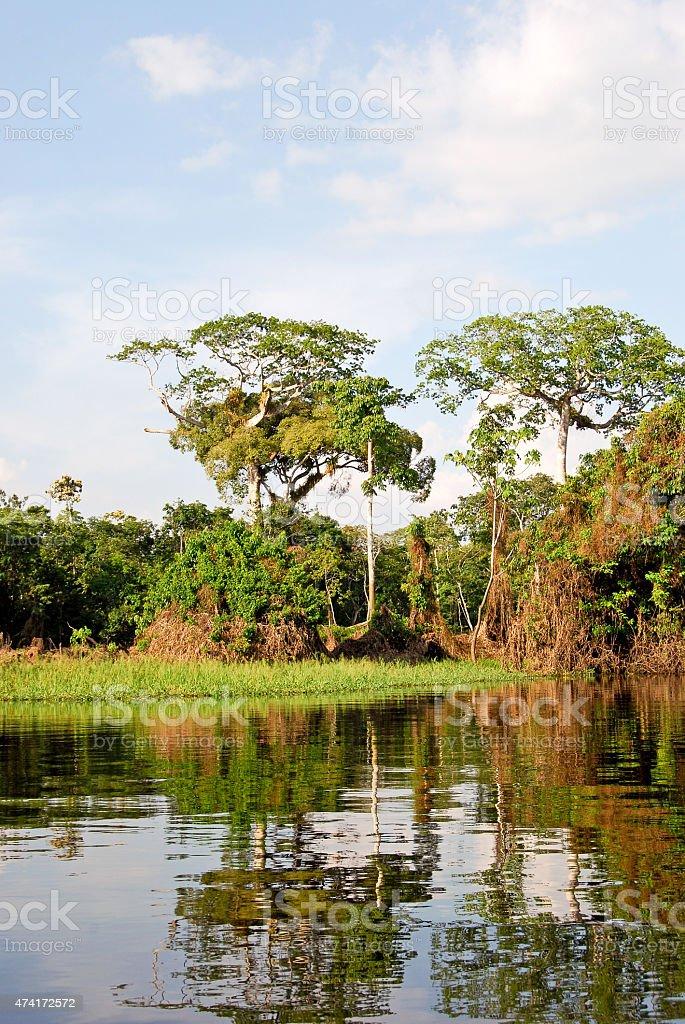 Expedition into the Amazon rainforest near Manaus, Brazil stock photo