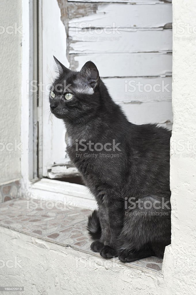 Experienced Cat royalty-free stock photo