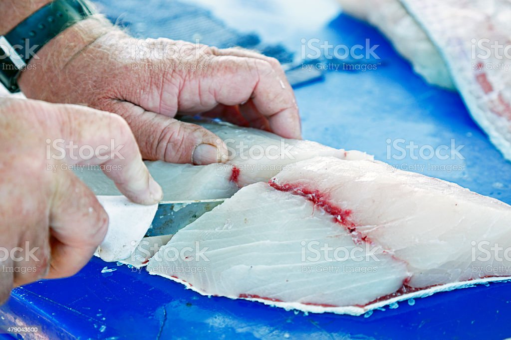 Experienced hands slicing large cobia fish fillet stock photo