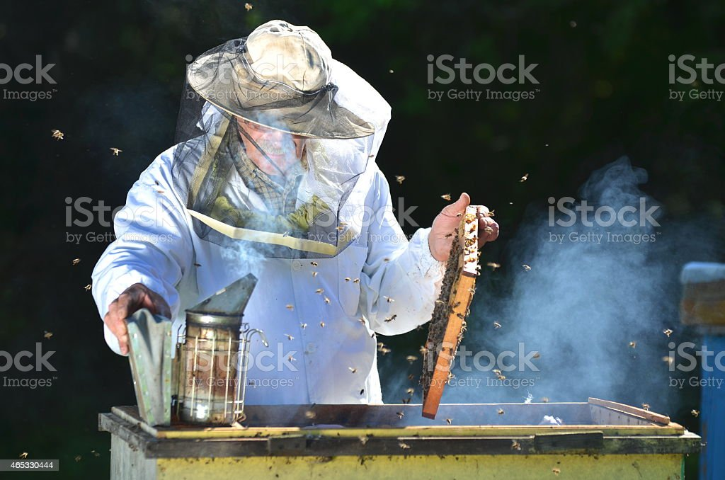 Experienced senior beekeeper making inspection in apiary after summer season stock photo