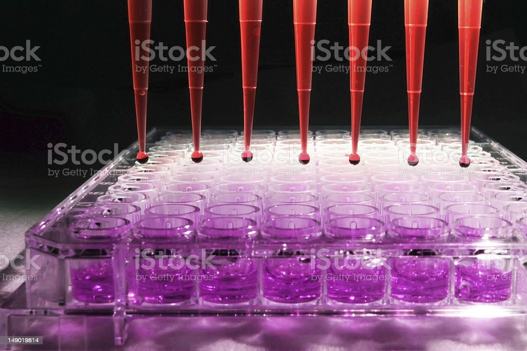 Experiment involving a purple substance and red droppers stock photo