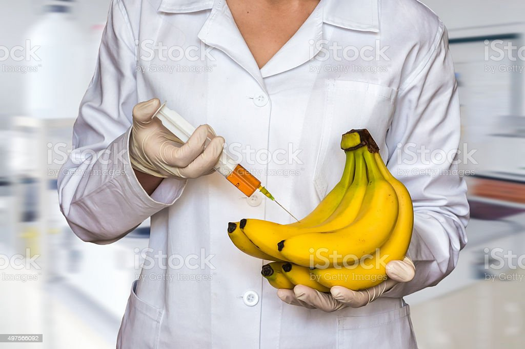 GMO experiment: Scientist injecting liquid from syringe into ban stock photo