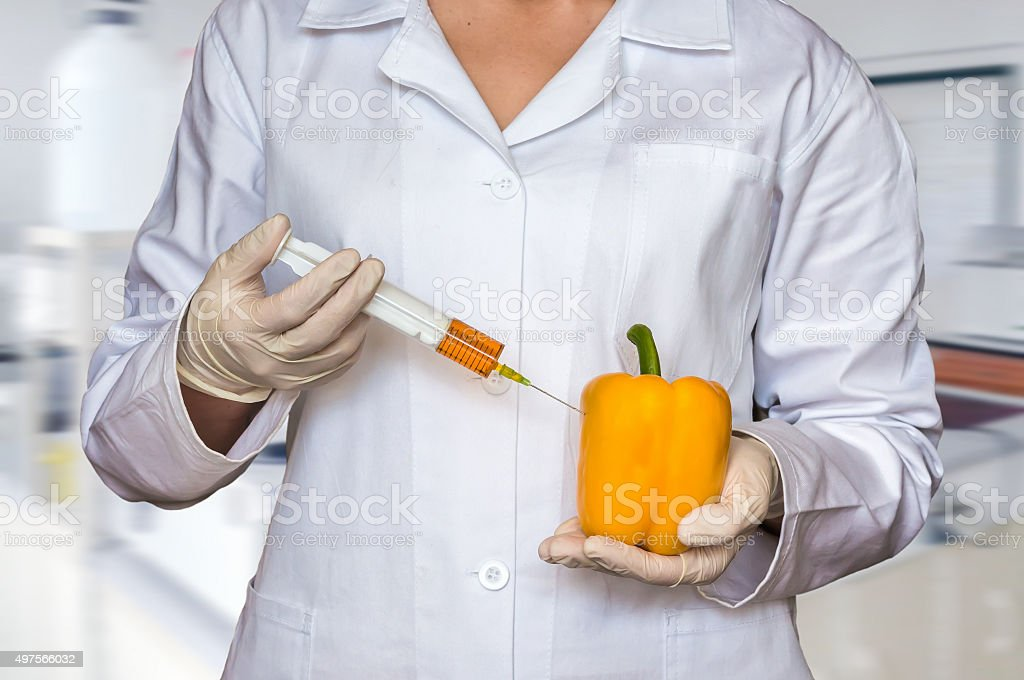 GMO experiment: Scientist injecting liquid from syringe into pep stock photo