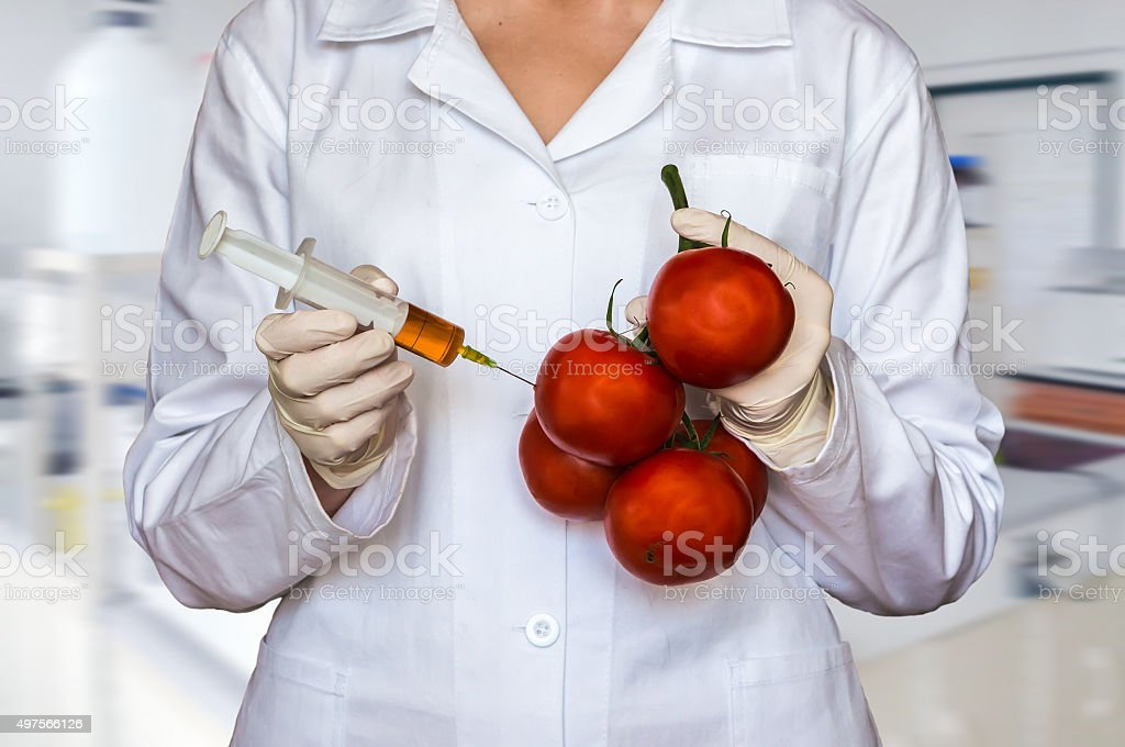 GMO experiment: Scientist injecting liquid from syringe into tom stock photo