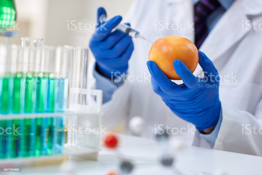 GMO experiment scientist injecting liquid into orange stock photo