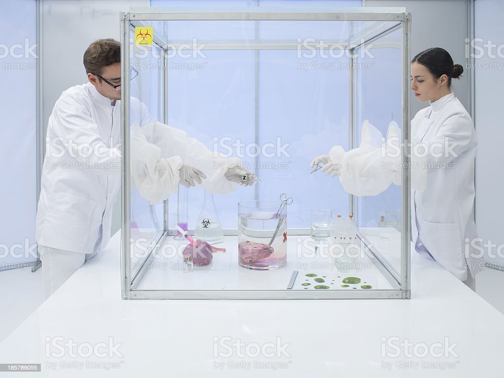 experimenting on biological matter in sterile chamber royalty-free stock photo