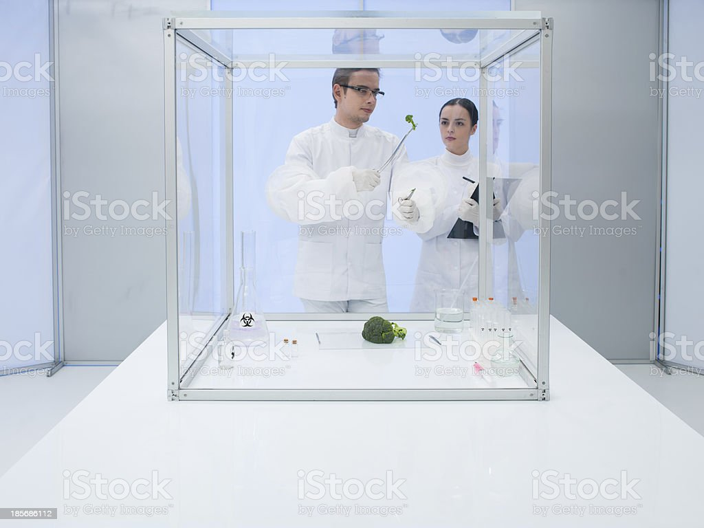 experimenting on vegetables in the lab royalty-free stock photo