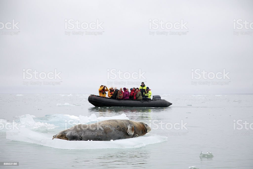 Explorers in the Arctic encountering a whale stock photo