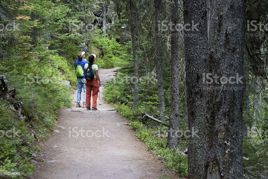 Exploring Nature royalty-free stock photo