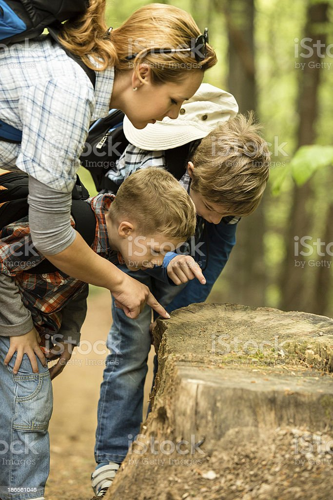 Exploring the nature, looking at tree stump stock photo