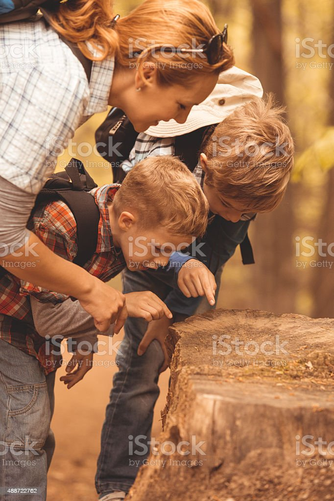 Exploring the nature, looking at tree trunk stock photo