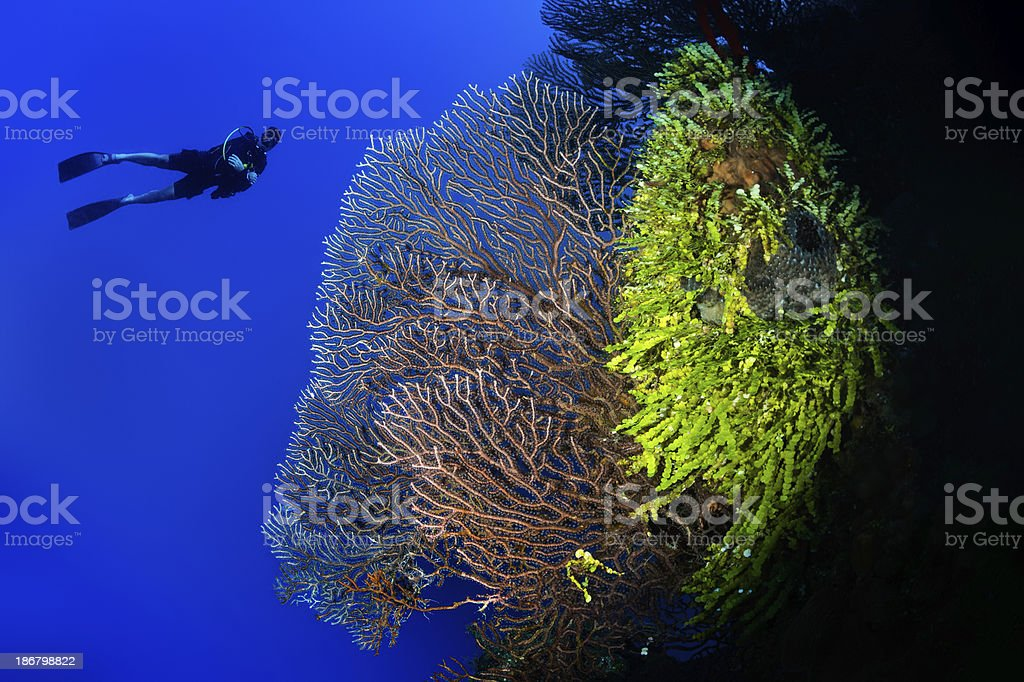 Exploring the reef royalty-free stock photo
