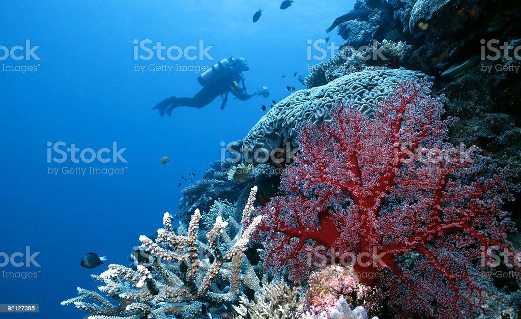 Explorer Togian Island Reef photo libre de droits