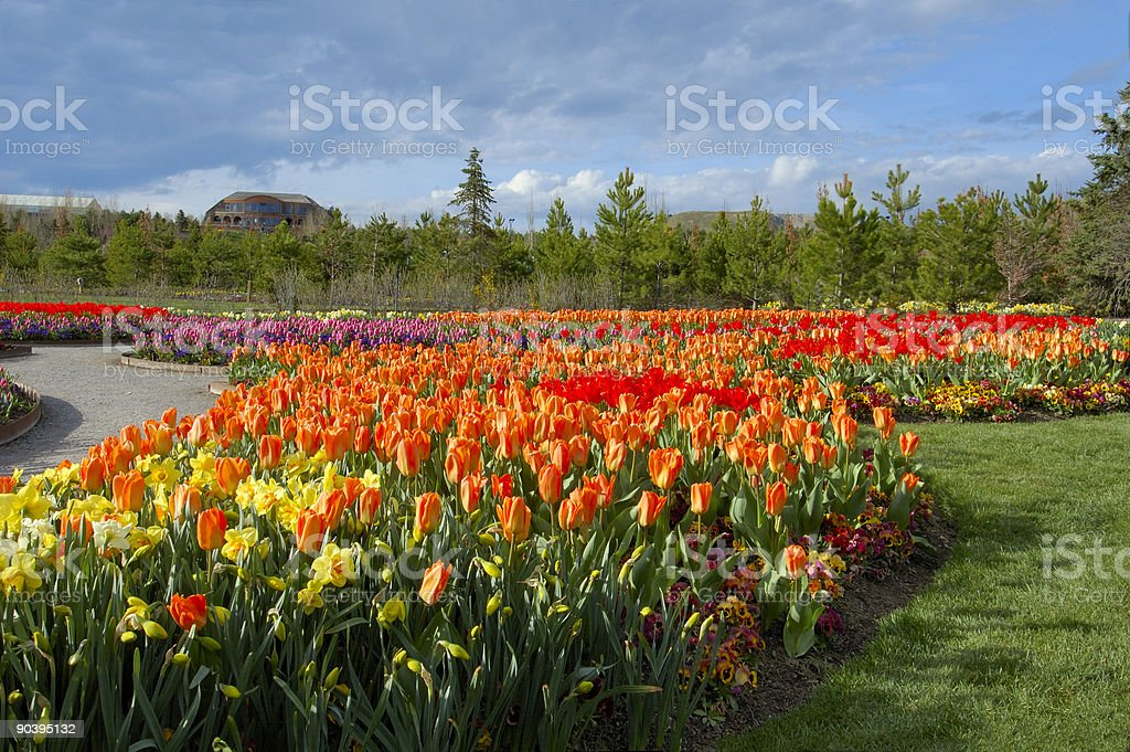 Explosion of Color stock photo