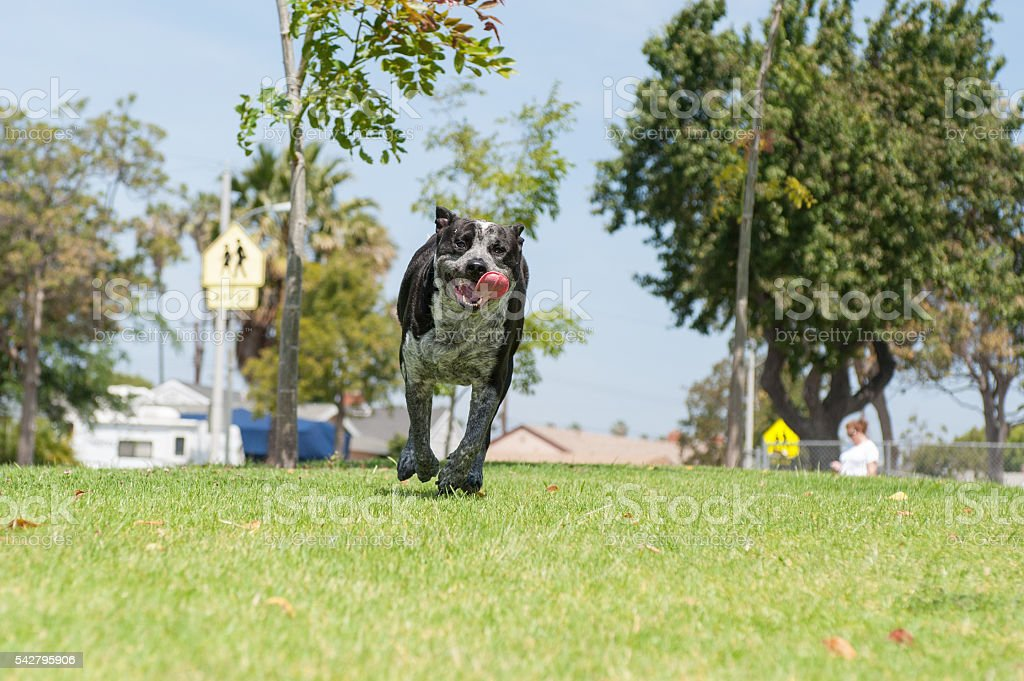 Expression of dog park excitement stock photo