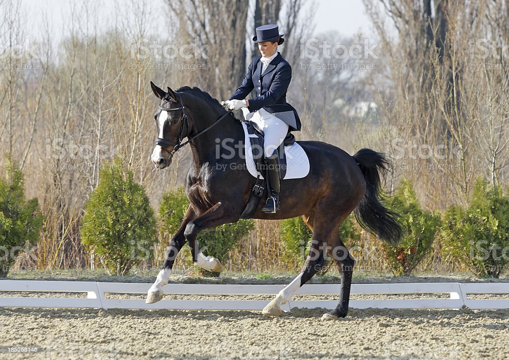 Extended gallop dressage scene stock photo