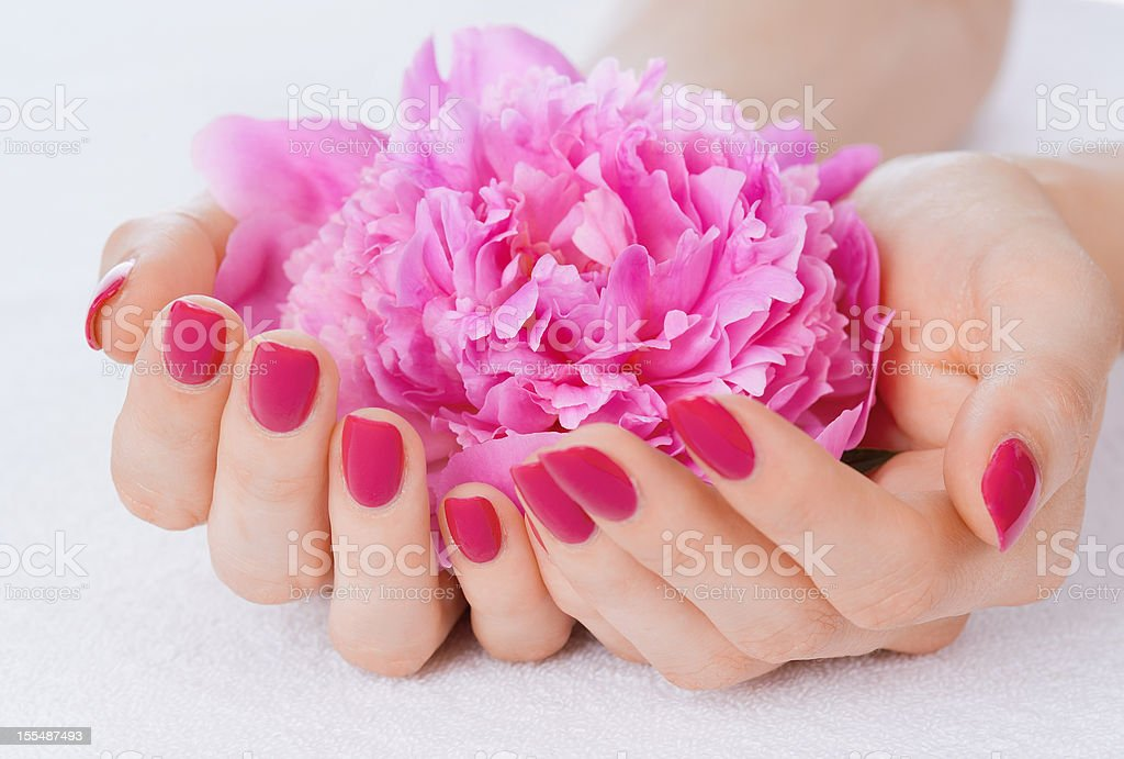 Extended hands with pink nail polish holding a pink flower royalty-free stock photo