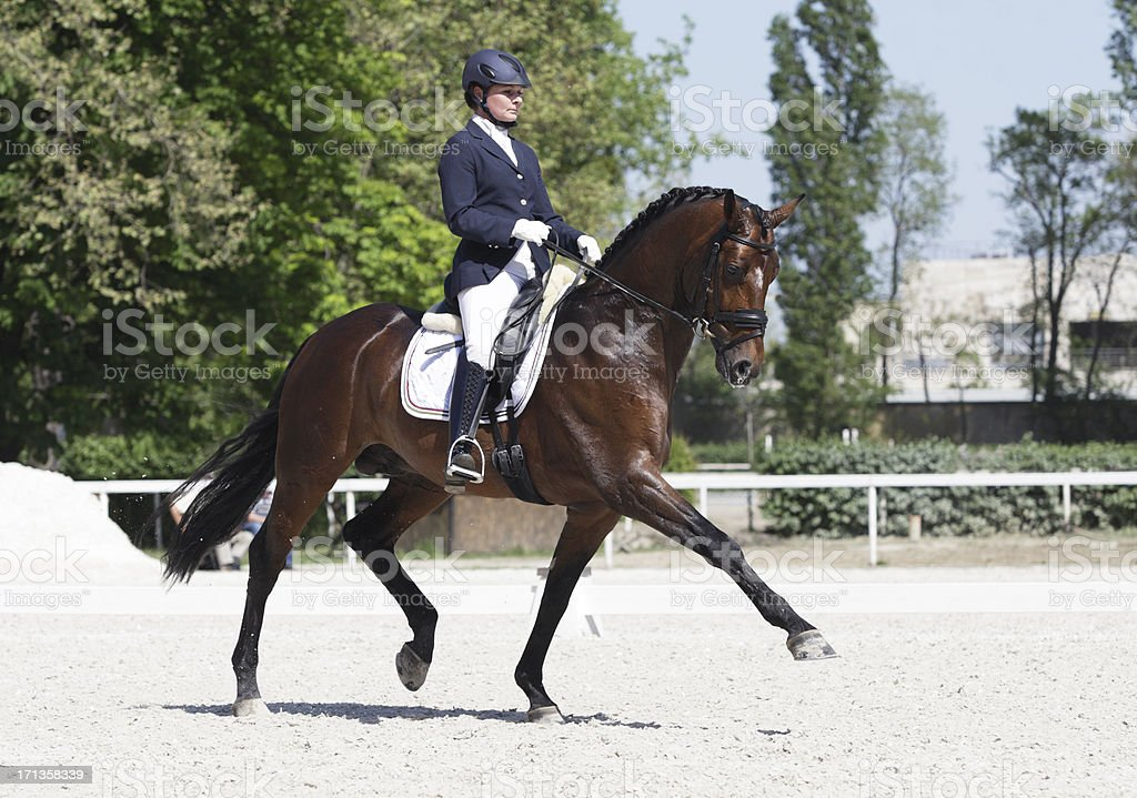 Extended trot dressage stock photo