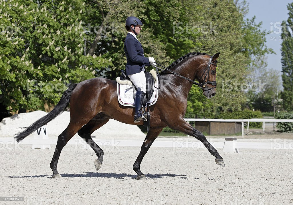 Extended trot stock photo