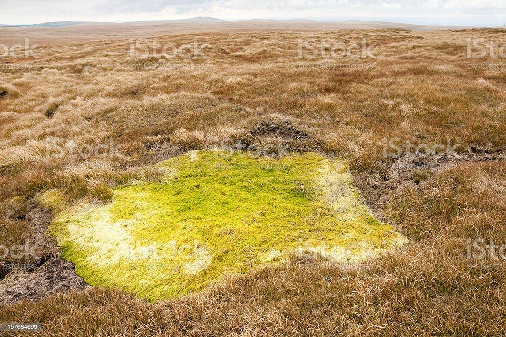 Extensive peat bog near Cut Hill Dartmoor stock photo