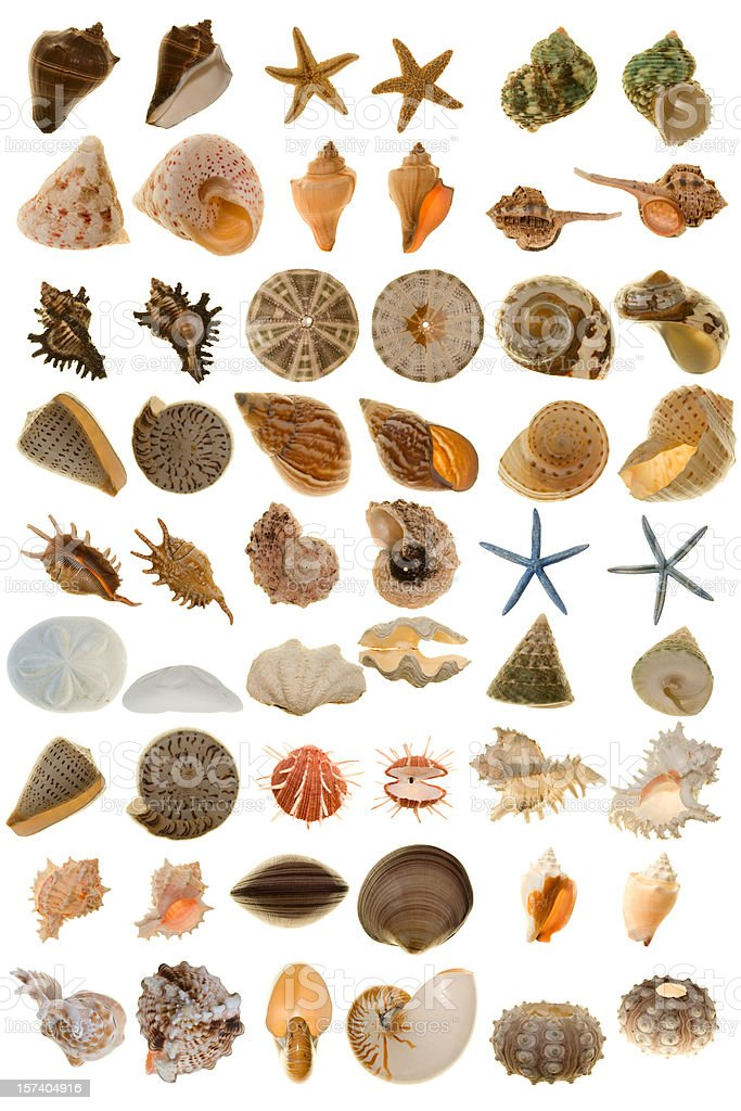 Extra Large Various Shell from the world stock photo