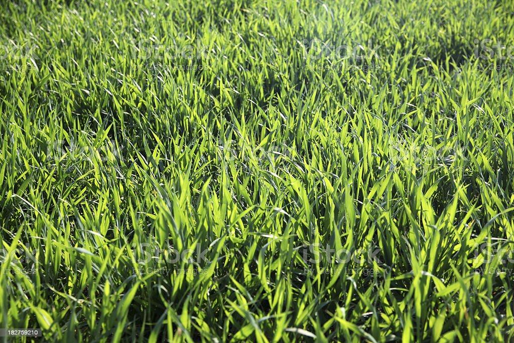 Extraordinary sunlight on green field stock photo