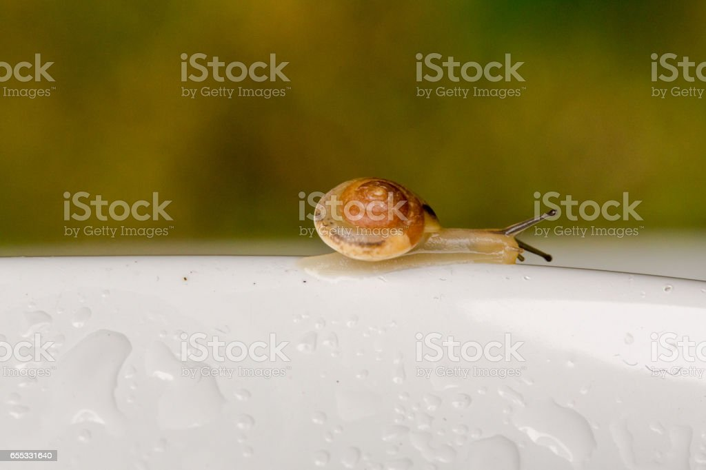 Extreme close- snail in garden stock photo