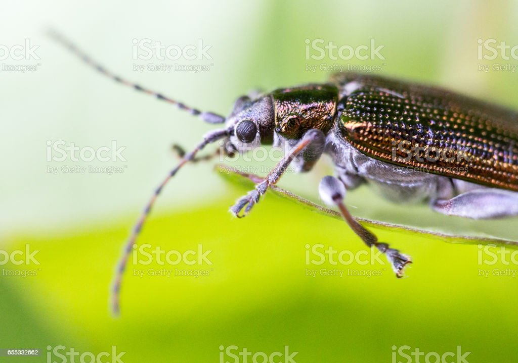 Extreme close-up insect shot stock photo