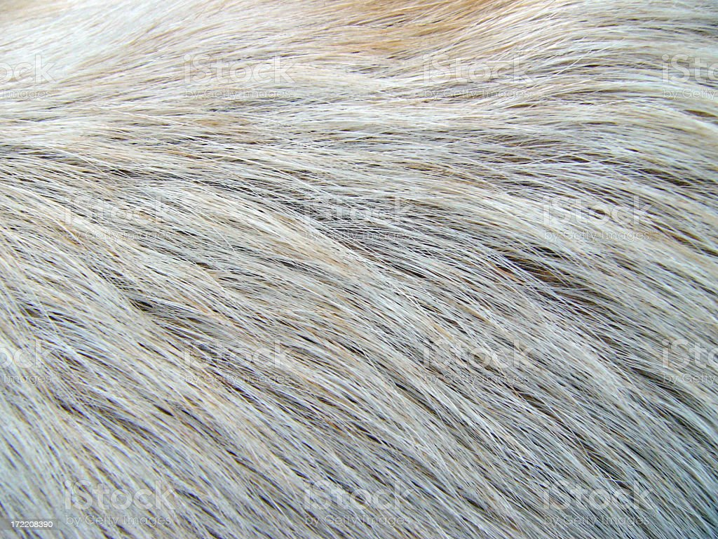 Extreme closeup of salt and pepper fur on an animal stock photo