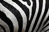 Extreme close-up photograph of zebra stripes