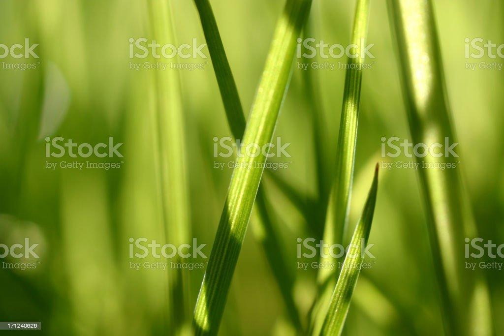 Extreme Macro: Grass royalty-free stock photo