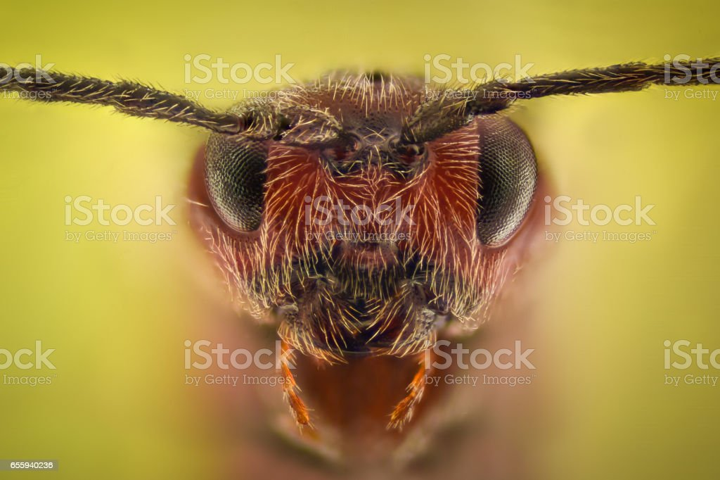 Extreme magnification - Ant queen portrait stock photo